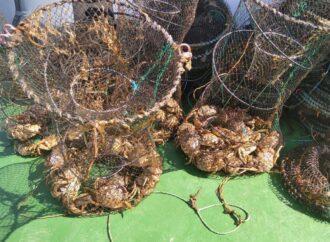 На Одещині зі ста браконьєрських пасток визволили майже 700 крабів