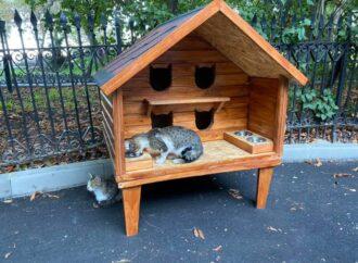 Новый куратор области и двухэтажный дом для котов: коротко о вчерашних одесских новостях