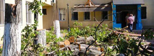 В Одессе возле Киевского райсуда вырубили здоровые деревья