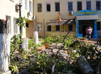 В Одесі на території суду спиляли близько десятка зелених дерев