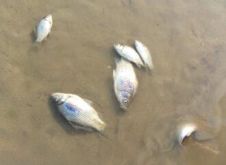 Гибель рыбы и очереди в скорой: чрезвычайные новости Одессы и области 15 сентября