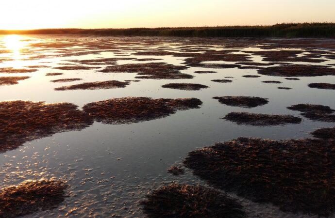 На Тузловских лиманах в Одесской области гибнет рыба