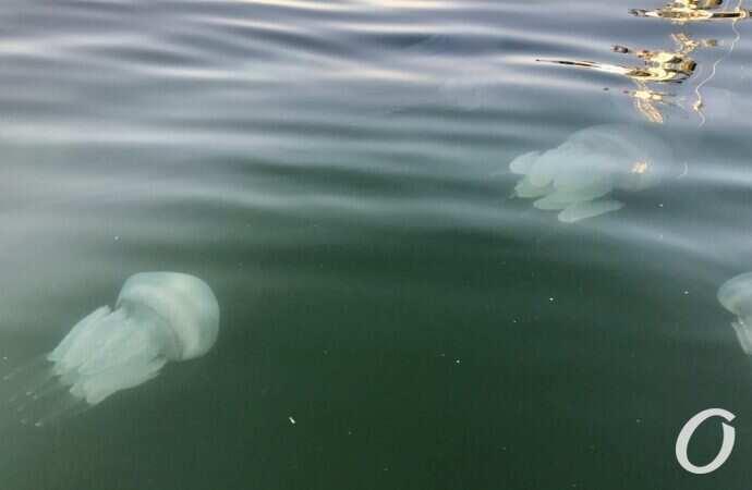 Опасно, но не смертельно: чем угрожают людям медузы в море возле Одессы?