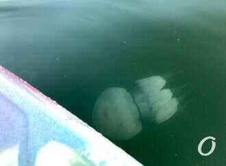 Ремонт Канатной и медузы в море: коротко о главных новостях Одессы