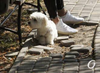 Знают ли одесситы правила выгула собак? (видео)