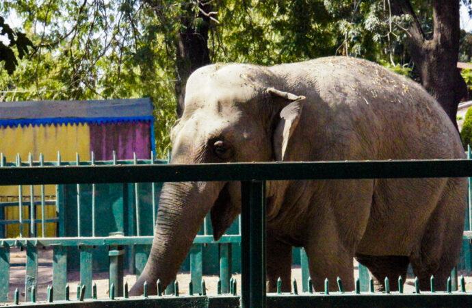 Ещё молодая женщина: одесскую слониху поздравили с днём рождения