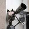 В Одессе поселился кот-астроном с телескопом