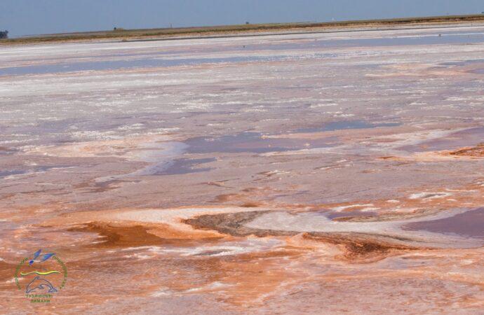 Эксперт сообщил об экологической катастрофе в Тузловских лиманах (фото)