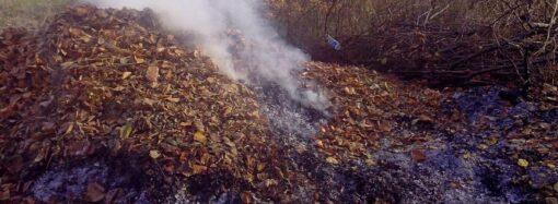 Поджог сухой листвы: каковы штрафы и куда жаловаться в Одессе?