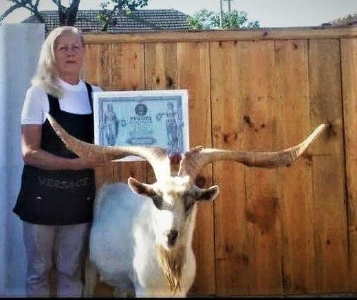 Самые большие рога: одесский козёл попал в Национальный реестр рекордов Украины