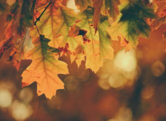 Погода в ноябре: синоптики дали прогноз на последний месяц осени