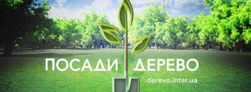 В Одесской области за 5 лет срубили почти 400 тыс. деревьев