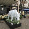 Ромина с улицы Дерибасовской: самая известная корова Одессы отправляется в путешествие (фото)