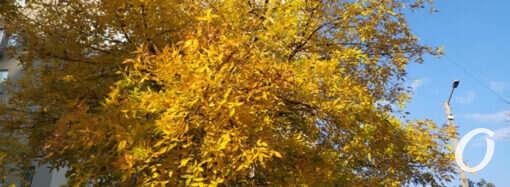 Погода в Одессе 21 октября: золотая осень?