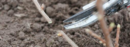 Во саду ли в огороде: осенние советы дачникам