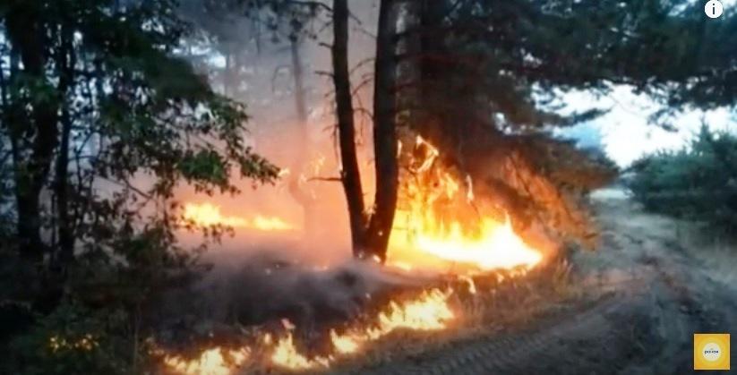 Утро с Интером: восстановление леса