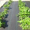 ТОП-6 вариантов применения агроткани