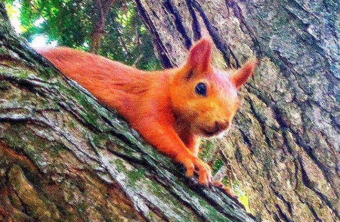 Одесситов радуют и удивляют бесстрашные рыжие зверьки (фото)