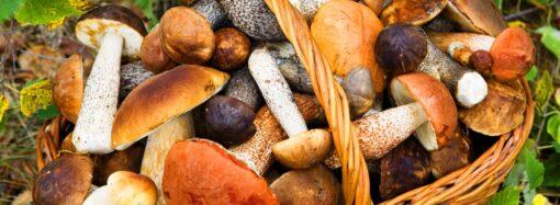 Грибная охота: куда одесситы ездят по грибы?