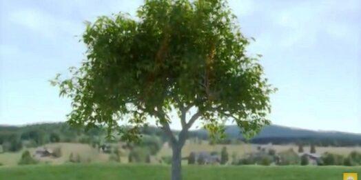 Как деревья спасают от наводнений и оползней?