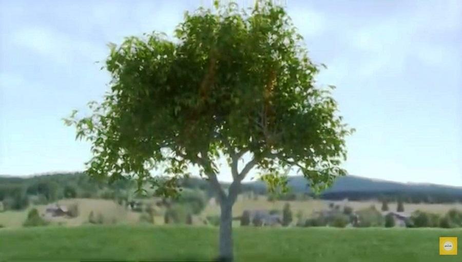 Утро с Интером: как дерев я спасают от наводнений и оползней