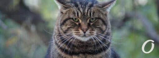 Одесские котики: как дела у хвостатых? (фото)