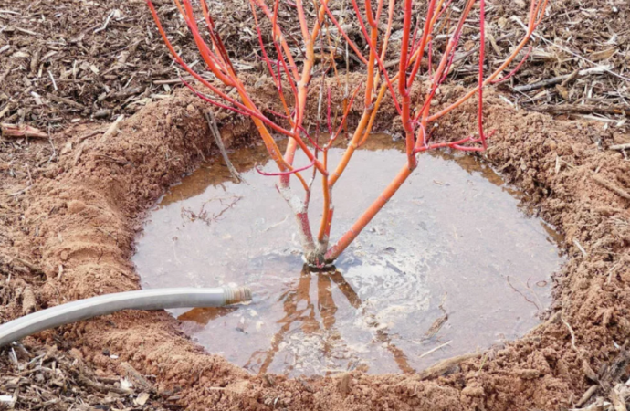 Дачные советы: влагозарядковый полив перед морозами и садово-огородные работы
