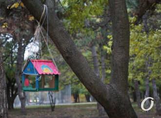 Одесситов зовут покормить пернатых в парке Шевченко