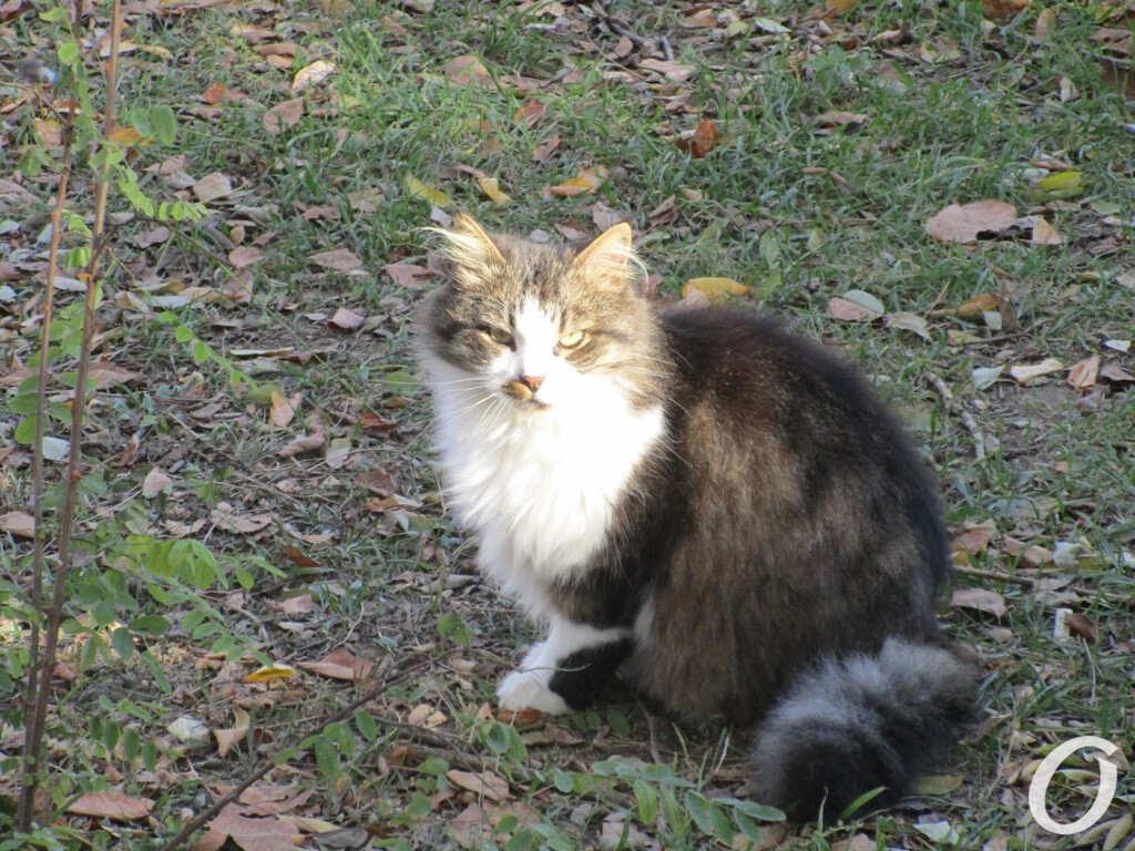 одесский котик, Трасса здоровья