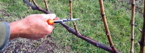 Дачные советы: работы в саду и огороде в декабре