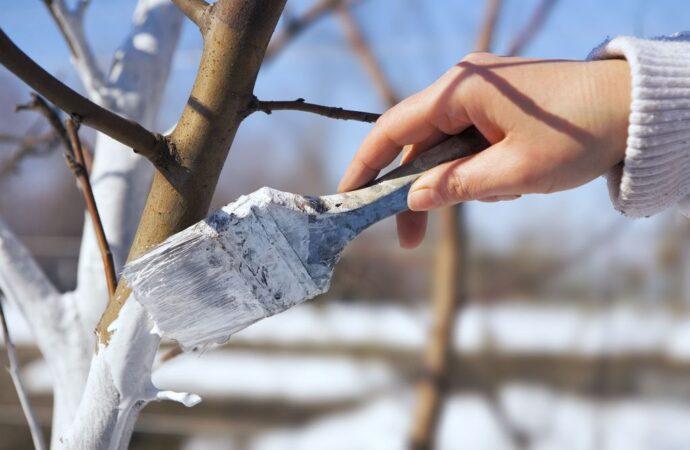 Дачные советы: зачем белить деревья?