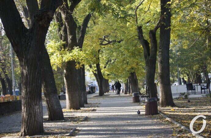 Осень в Одессе: как выглядит Куликово поле в ноябре (фото)