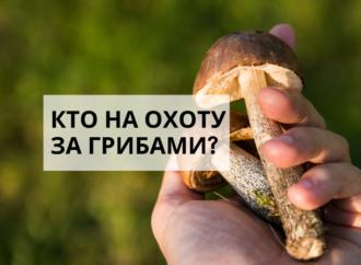 За грибами: едем в Саврань с опытным проводником