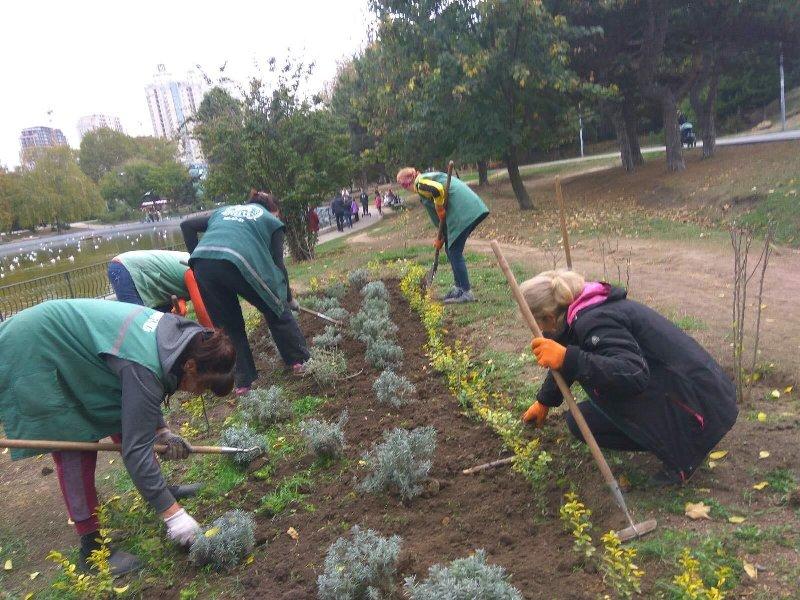 озеленение, высадка растений