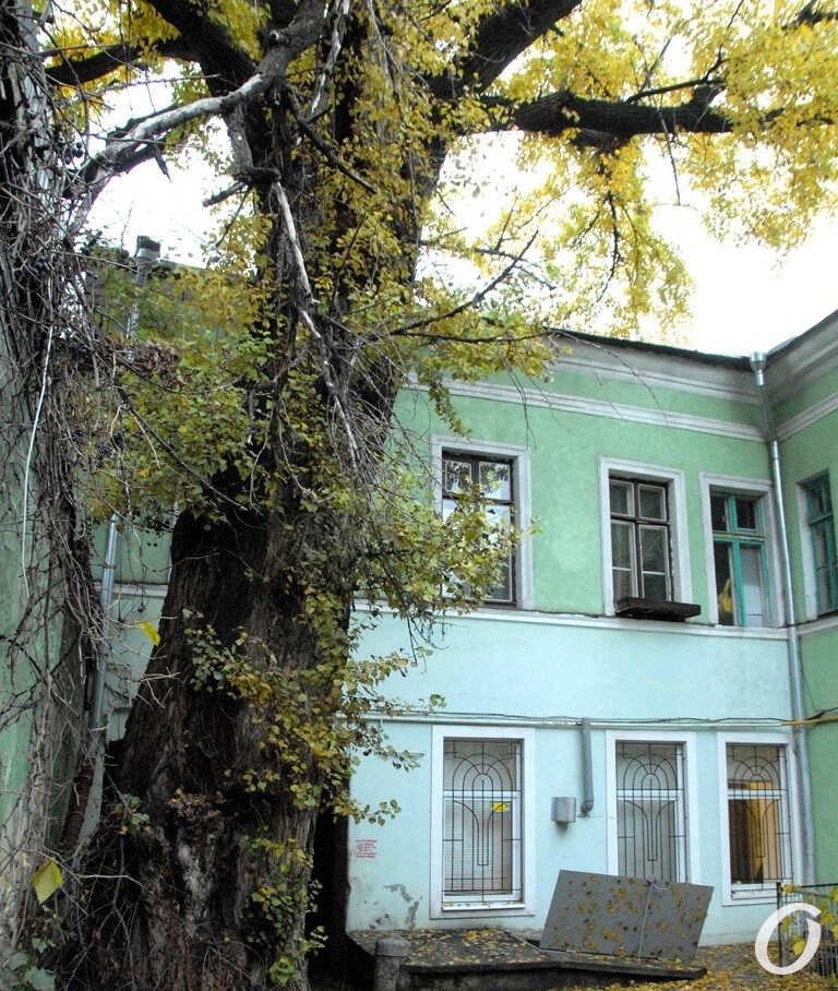 пушкинский тополь в Одессе