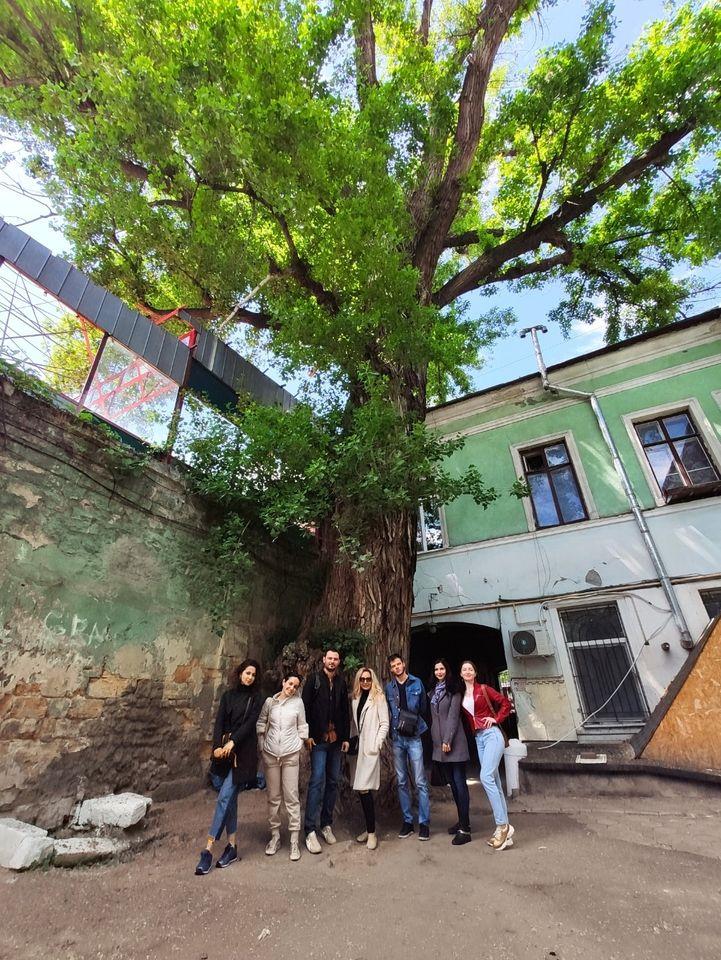 Канадский тополь в Одессе