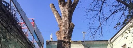 В Одессе распилили памятник природы во дворе на Торговой (фото)