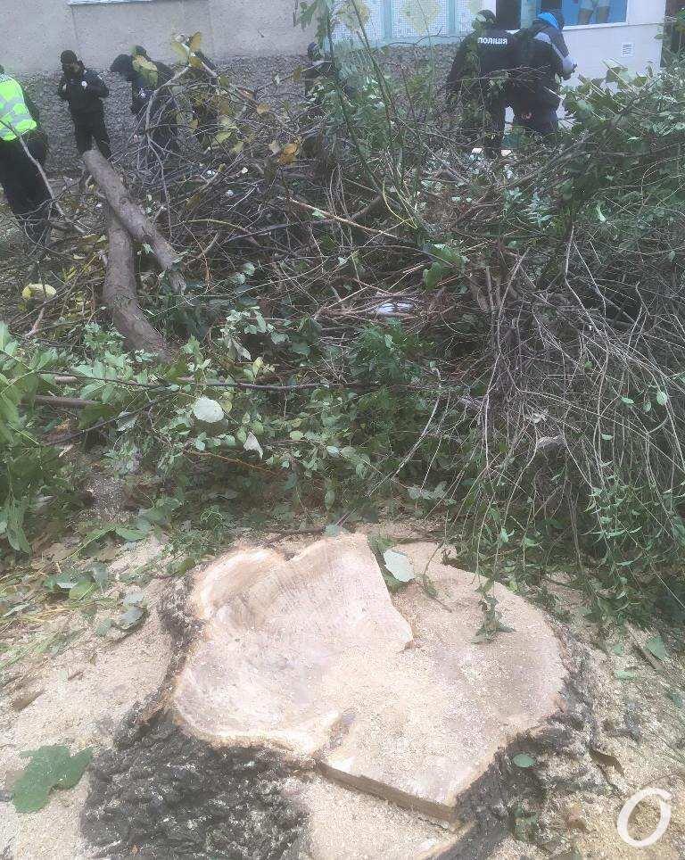 спилили деревья