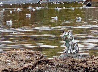 Одесский кот Витражик вернулся в парк Победы (фото)