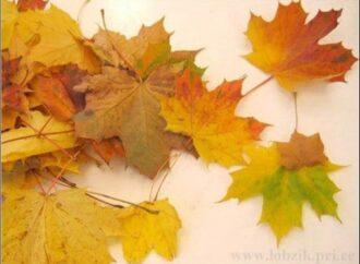 Под Одессой установили новогоднюю елку из осенних листьев (фото)