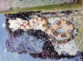 Ползучий сюрприз: на одесском пляже нашли живого питона (фото)