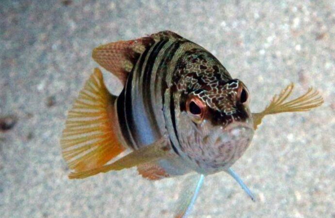 В Одесском заливе выловили уникальную рыбу