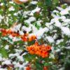 Снегопад в Одесской области: куда уже пришла зима? (фото)