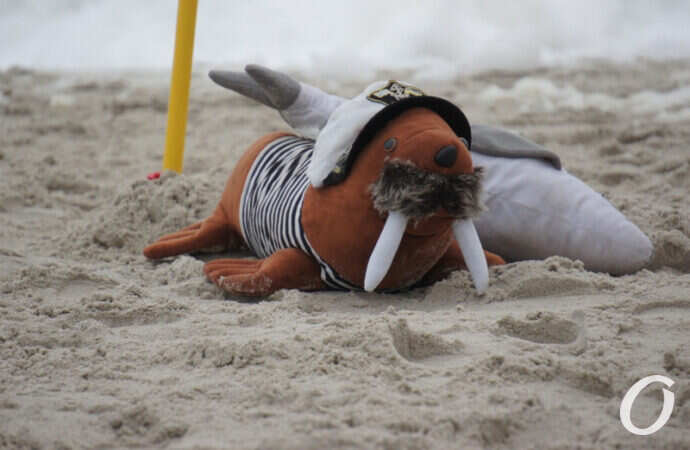 Одесские «моржи» провели свой первый зимний заплыв (фото)