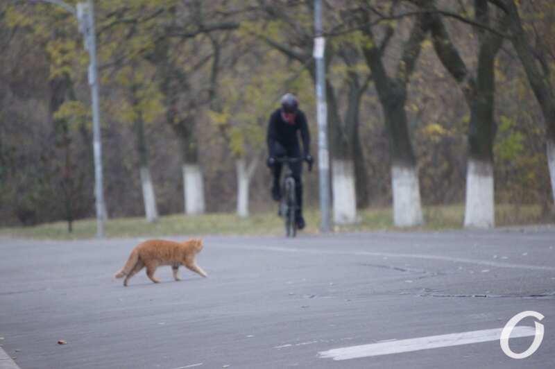 велосипедист и котик