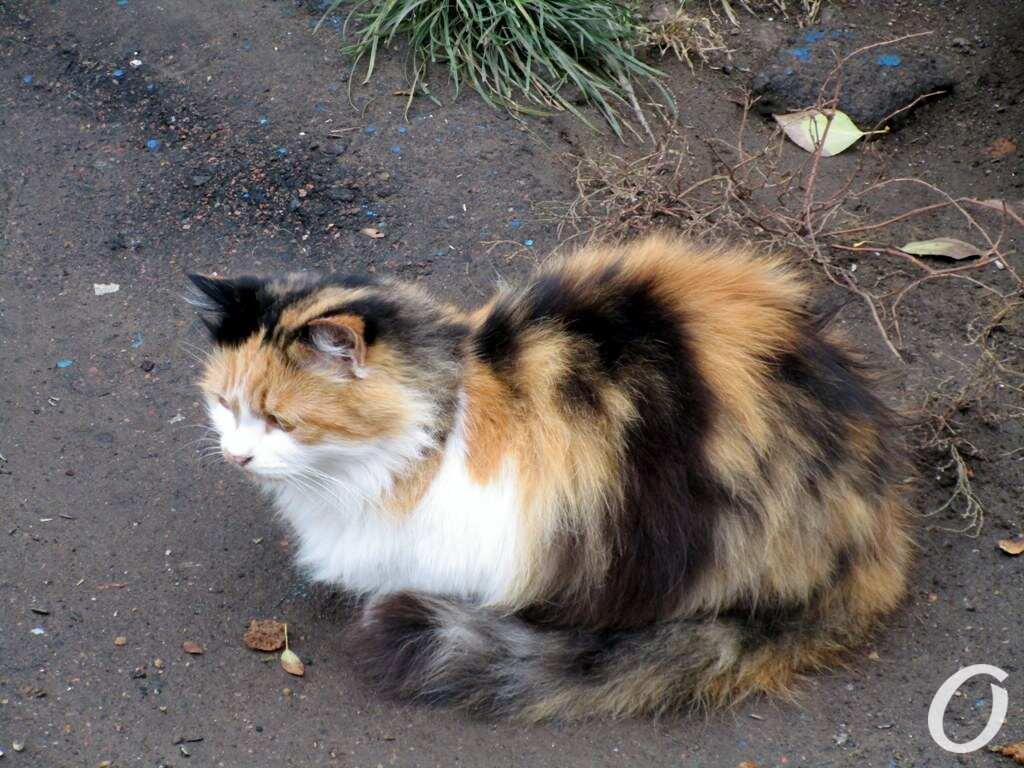улица Одария, кошка