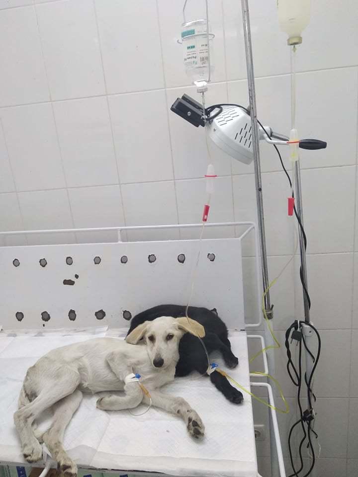 больница для животных одесса