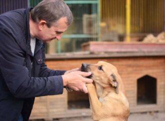 И у животных есть права: как Одесса заботится о братьях своих меньших?