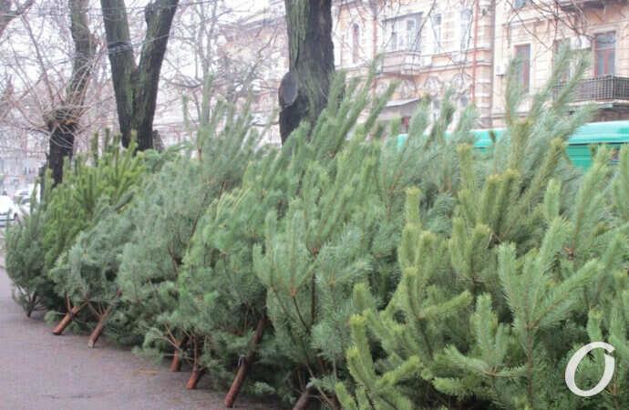 Что произошло в Одессе 14 декабря: компенсация бизнесменам и первые елочные базары