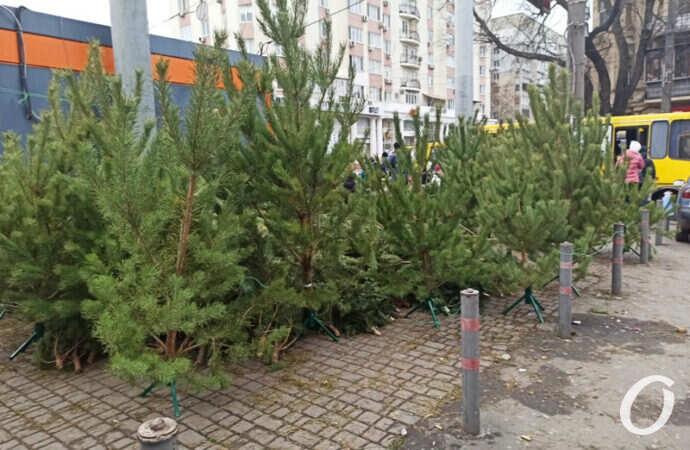Новый год 2021: почем в Одессе елки? (фото)